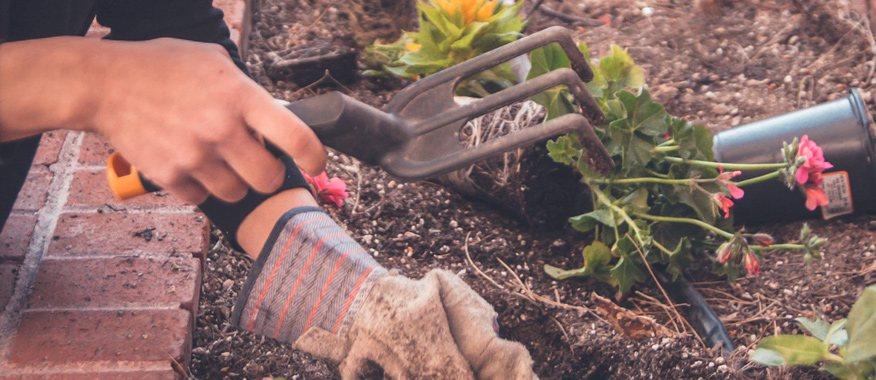 sửa sang vườn tược