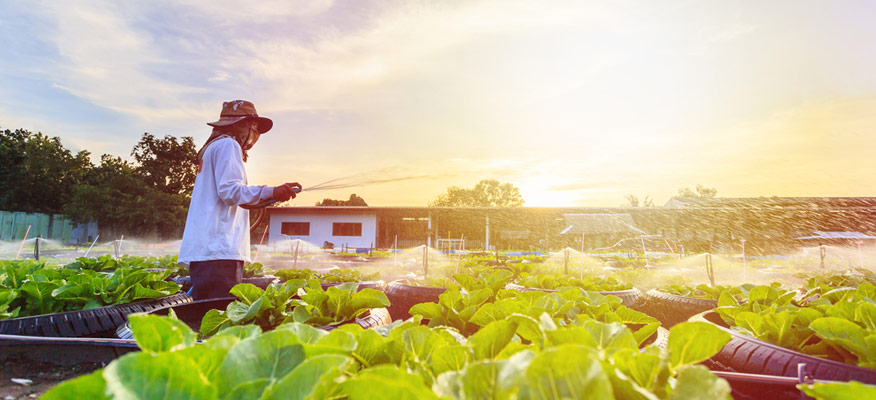 xây dựng trang trại trồng rau hữu cơ