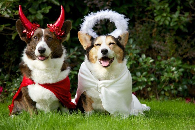 Kinh doanh trang phục Halloween cho thú cưng