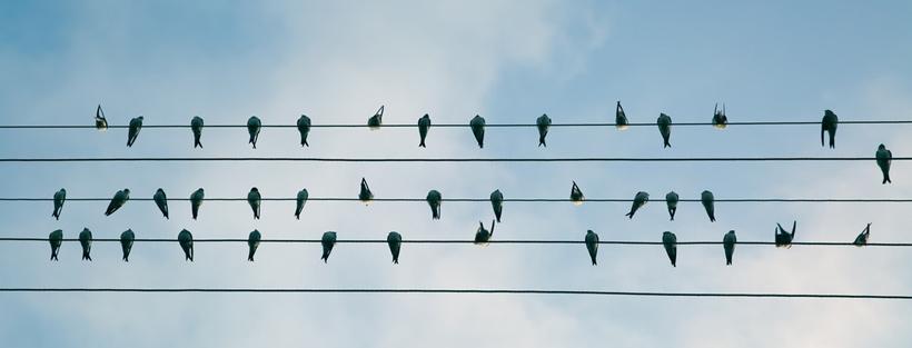 ảnh bìa facebook đàn chim