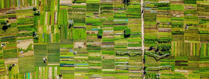 ảnh bìa ruộng tại Việt Nam