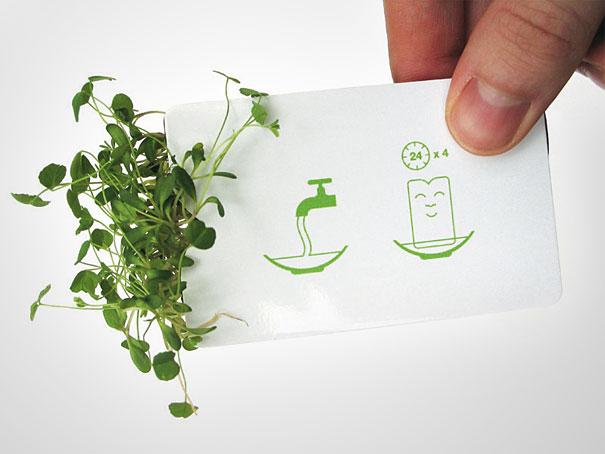 card visit mầm cây