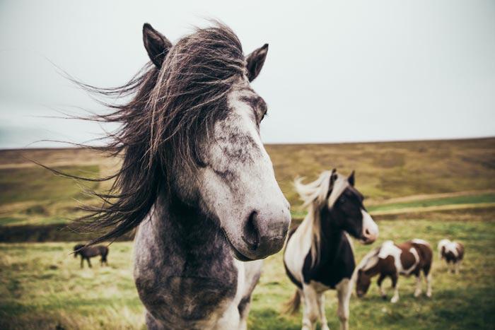 hình ảnh đẹp về con ngựa