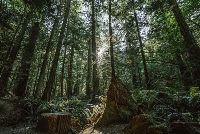 hình ảnh đẹp về khu rừng