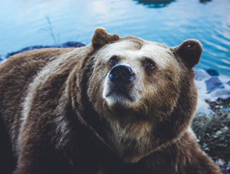hình nền máy tính đẹp con gấu