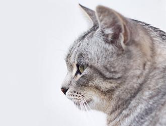 hình nền máy tính mèo dễ thương