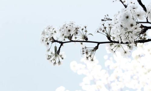 hình nền powerpoint hoa đẹp